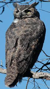 owl 180 degrees