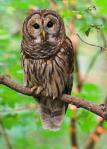 What Can The Head Of An Owl Teach Us??????