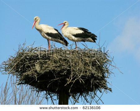 two-white-storks