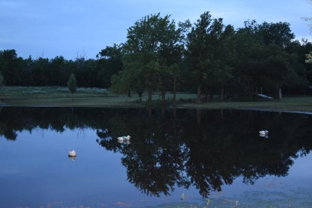 evening pond 003